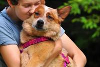 Louise Daigle, Dog Trainer & Vet. Tech.