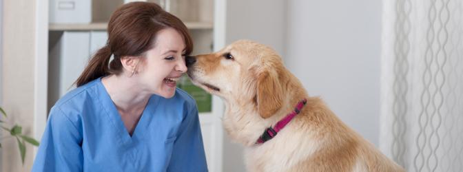 veterinarian-assistant-training-program