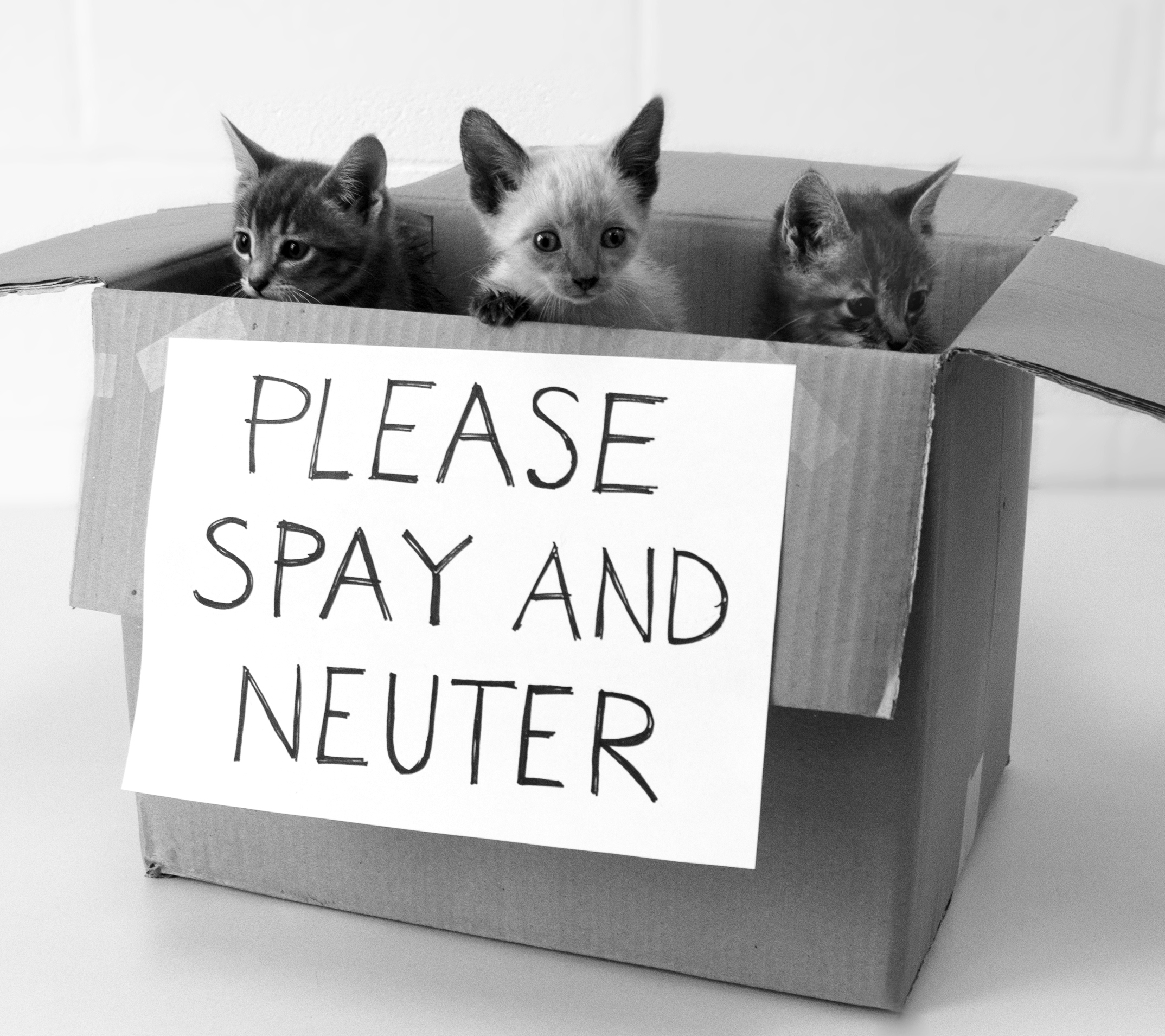 spay neutering your pets That's because we've been conditioned to believe that a responsible pet owner means spaying and neutering your dog i was taught to believe the same thing .