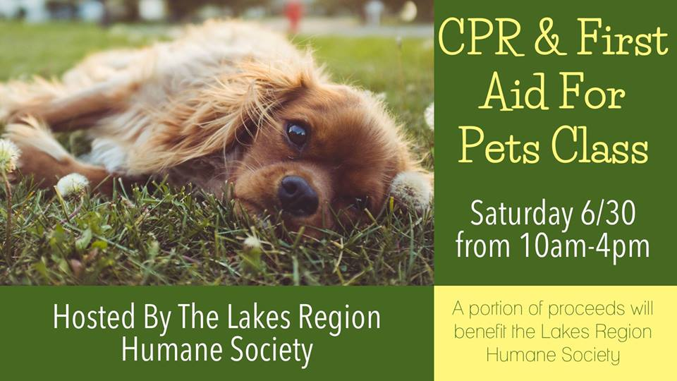 Pet First Aid Cpr Certification Lakes Region Humane Society
